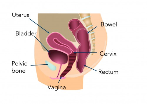 Different Types Of Pelvic Organ Prolapse Ami
